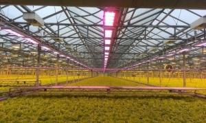 Правильный спектр – ключ к успеху светодиодов на рынке тепличного освещения