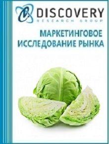 Анализ рынка капусты в России