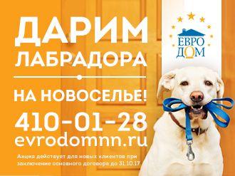 Компания «Евродом» дарит лабрадора на новоселье!