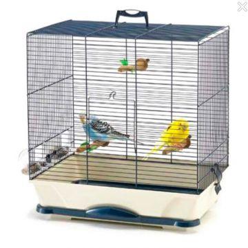 Интернет-зоомагазин PetsCage.ru раскрыл секреты разведения попугаев в домашних условиях