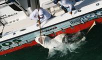 Премьера на телеканале Outdoor Channel: «Соревнование по спортивной ловле акул»