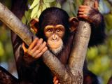 Премьера на телеканале JIMJAM - Животные - моя семья
