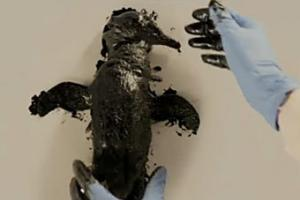 Greenpeace стал на защиту птиц Новой Зеландии
