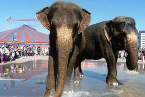 Барнаульская транспортная прокуратура нашла в рекламе цирка слонов грубейшее нарушение