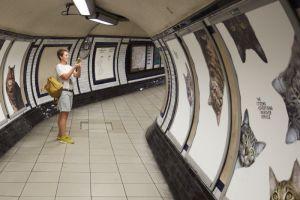 Энтузиасты заменили всю рекламу на лондонской станции метро на изображения котов при помощи кампании на Kickstarter