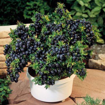 Домашнее садоводство – 6 растений для красоты и еды