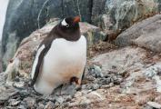 Технологии + Экология = Антарктический синдром