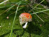 """Эксклюзивное драгоценное кольцо """"Апельсиновое дерево"""" из новой коллекции """"Тайный сад"""""""