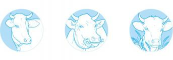 Разработан сайт молочных продуктов «Лосево»