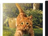 «Нестле Пурина» представила новый рекламный ролик в поддержку перезапуска бренда корма для кошек FRISKIES